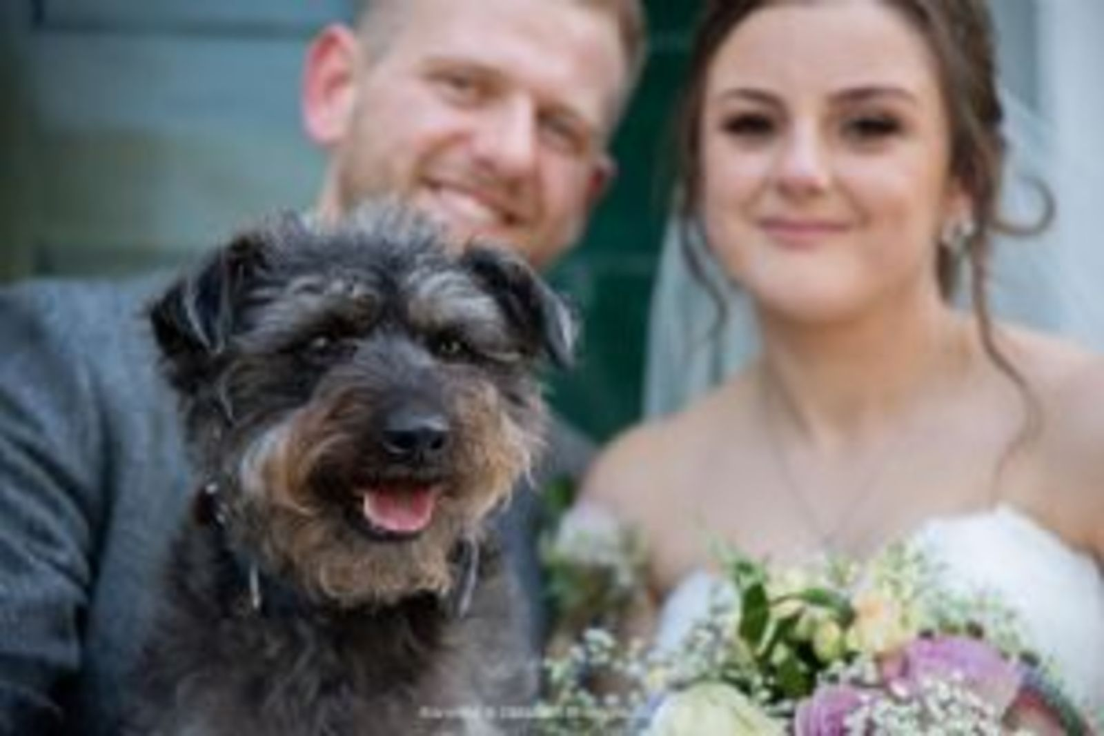 That's Pawfect - dogs at your wedding service